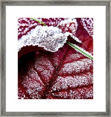 Sugar Coated Morning Framed Print by Gwyn Newcombe