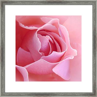 Sugar Of Rose Framed Print by Jacqueline Migell