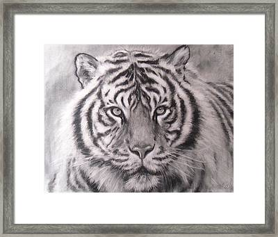 Sumatran Tiger Framed Print by Adrienne Martino