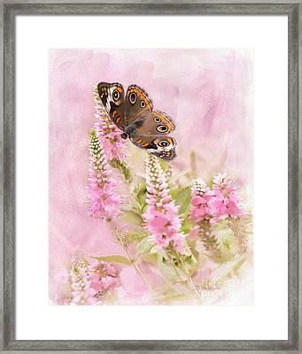 Summer Daze Framed Print by Betty LaRue