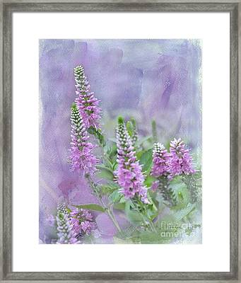 Summer Dreams Framed Print by Betty LaRue