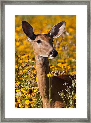 Summer Dreams Framed Print by James Marvin Phelps