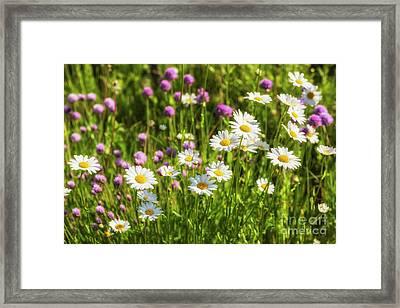 Summer Garden Framed Print by Veikko Suikkanen