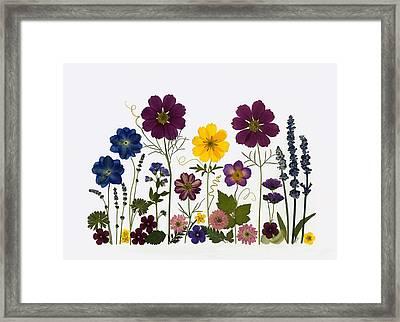 Summer Garden2 Framed Print by Ellie Roden