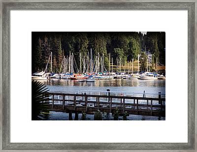 Summer In Deep Cove Framed Print by Tom Buchanan