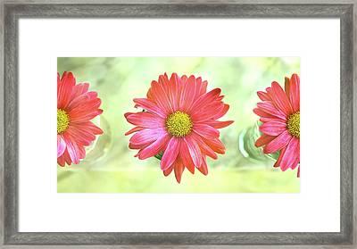 Summer Framed Print by Laura Fasulo