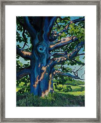Summer Light And Shadow Framed Print by Andrew Danielsen