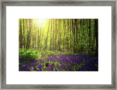 Summer Light Framed Print by Martin Newman