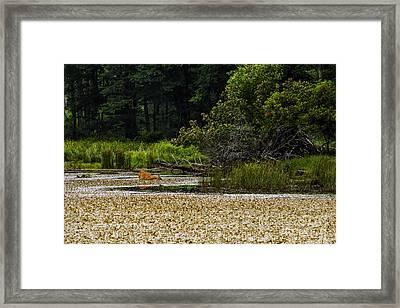 Summer Monongahela National Forest Framed Print by Thomas R Fletcher