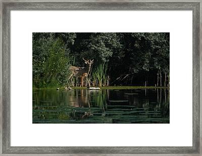 Summer Morning Walk Framed Print by Ernie Echols