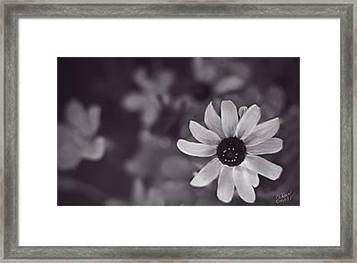 Summer Sunshine - Monochrome By Fleblanc Framed Print by F Leblanc