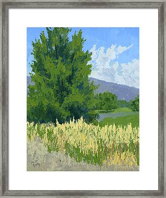 Summer Tree Framed Print by David King