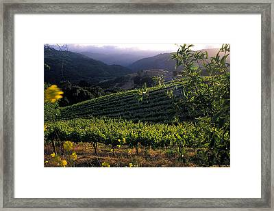 Summer Vineyard Framed Print by Kathy Yates