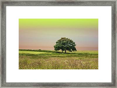 Summer's Evening Framed Print by Martin Newman