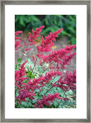 Summer's Offering Framed Print by Corinne Rhode