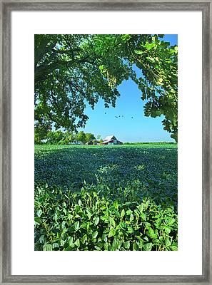 Summertime Blues Framed Print by Phil Koch