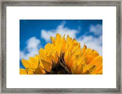 Summertime Happiness Framed Print by Shelby Young