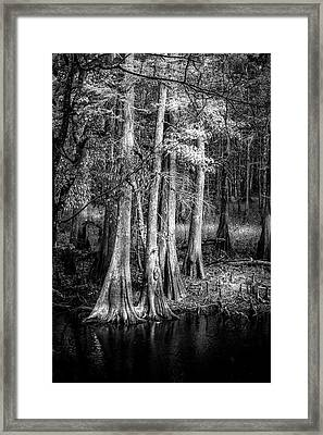 Sun Drenched Framed Print by Marvin Spates