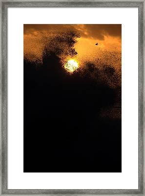 Sun Monster Framed Print by Brad Scott
