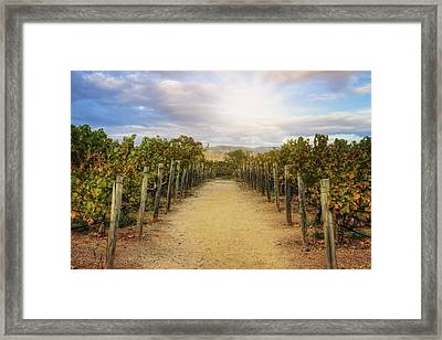 Sun Over Vineyard At Winery In Napa Valley 2 Framed Print by Jennifer Rondinelli Reilly - Fine Art Photography