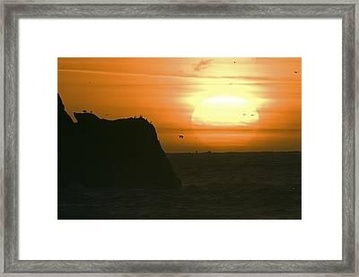 Sun Setting With Flying Birds Framed Print by Rich Reid