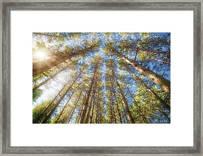 Sun Shining Through Treetops - Retzer Nature Center Framed Print by Jennifer Rondinelli Reilly