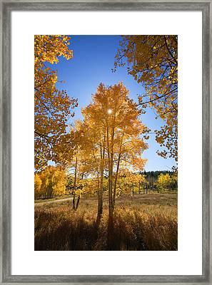 Sun Through Aspens Framed Print by Ron Dahlquist - Printscapes