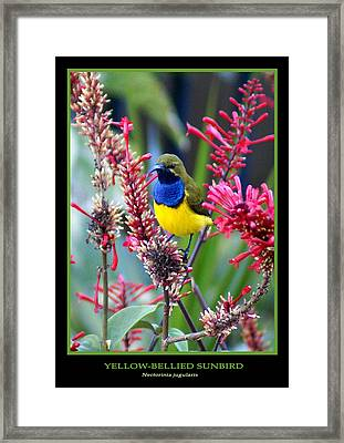 Sunbird Framed Print by Holly Kempe