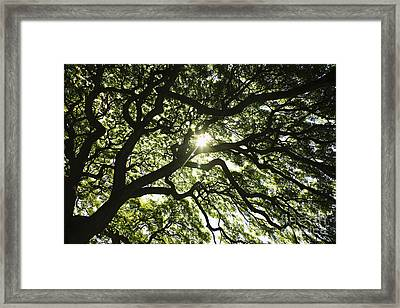 Sunburst Through Tree Framed Print by Brandon Tabiolo - Printscapes