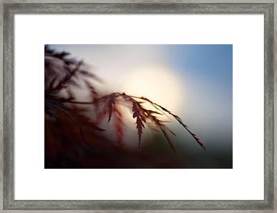 Sundown Framed Print by Shane Holsclaw