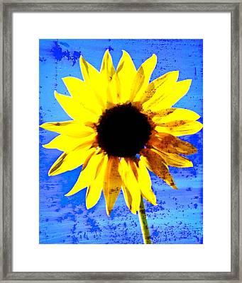Sunflower 12 Framed Print by Marty Koch