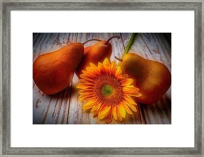 Sunflower And Pears Framed Print by Garry Gay