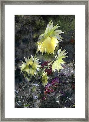 Sunflower Dream Framed Print by Tom Romeo
