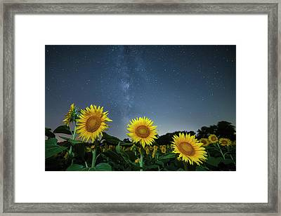 Sunflower Galaxy Framed Print by Ryan Heffron