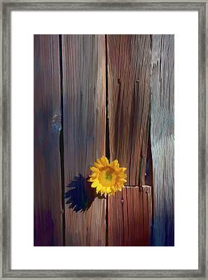 Sunflower In Barn Wood Framed Print by Garry Gay