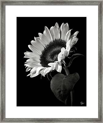 Sunflower In Black And White Framed Print by Endre Balogh