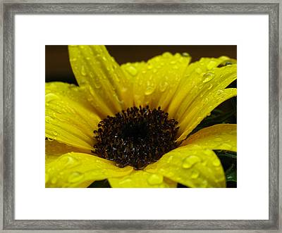 Sunflower Macro Framed Print by Juergen Roth