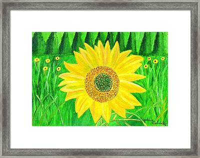 Sunflower  Framed Print by Magdalena Frohnsdorff