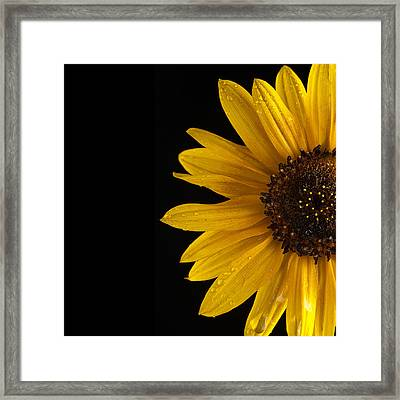 Sunflower Number 3 Framed Print by Steve Gadomski