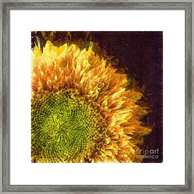 Sunflower Pencil Framed Print by Edward Fielding