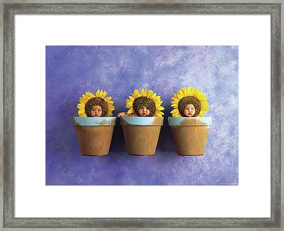 Sunflower Pots Framed Print by Anne Geddes