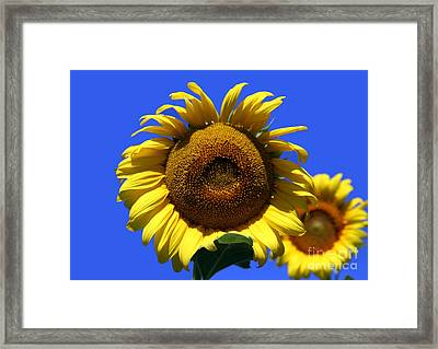 Sunflower Series 09 Framed Print by Amanda Barcon