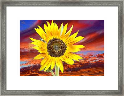Sunflower Sunset Framed Print by James BO  Insogna