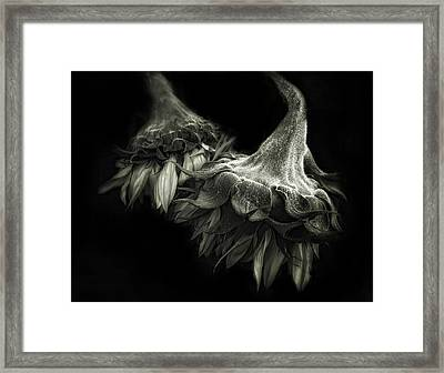 Sunflower Tango Framed Print by Jessica Jenney