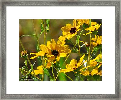 Sunflowers Along The Trail Framed Print by Barbara Bowen