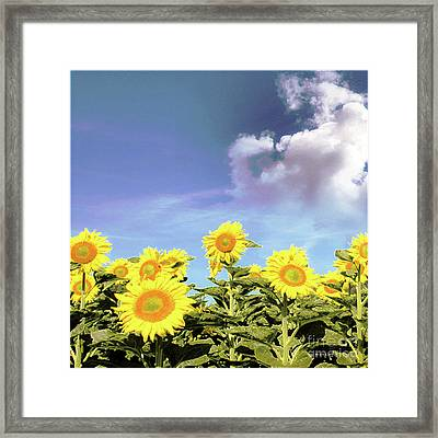 Sunflowers Flourish Visions Of Summer Sun Framed Print by Mona Stut