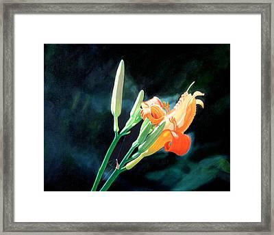 Sunlight Framed Print by Harlan