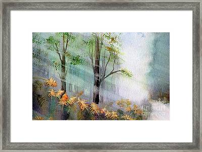 Sunlight In The Forest Framed Print by Kim Hamilton