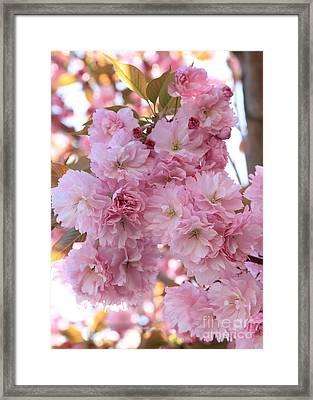 Sunlight Through Pink Blossoms Framed Print by Carol Groenen
