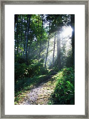 Sunlight Through Trees, Ecola State Framed Print by Natural Selection Craig Tuttle
